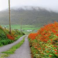 Roads with grass growing in the middle, Ireland off the beaten track